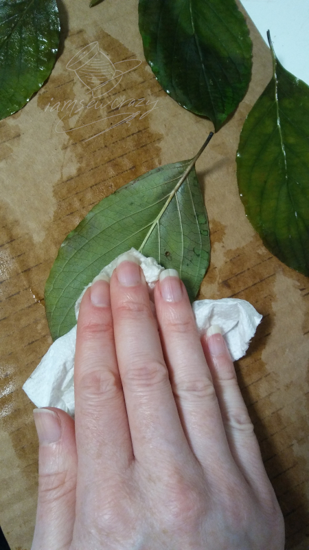 blotting leaves dry with paper towels