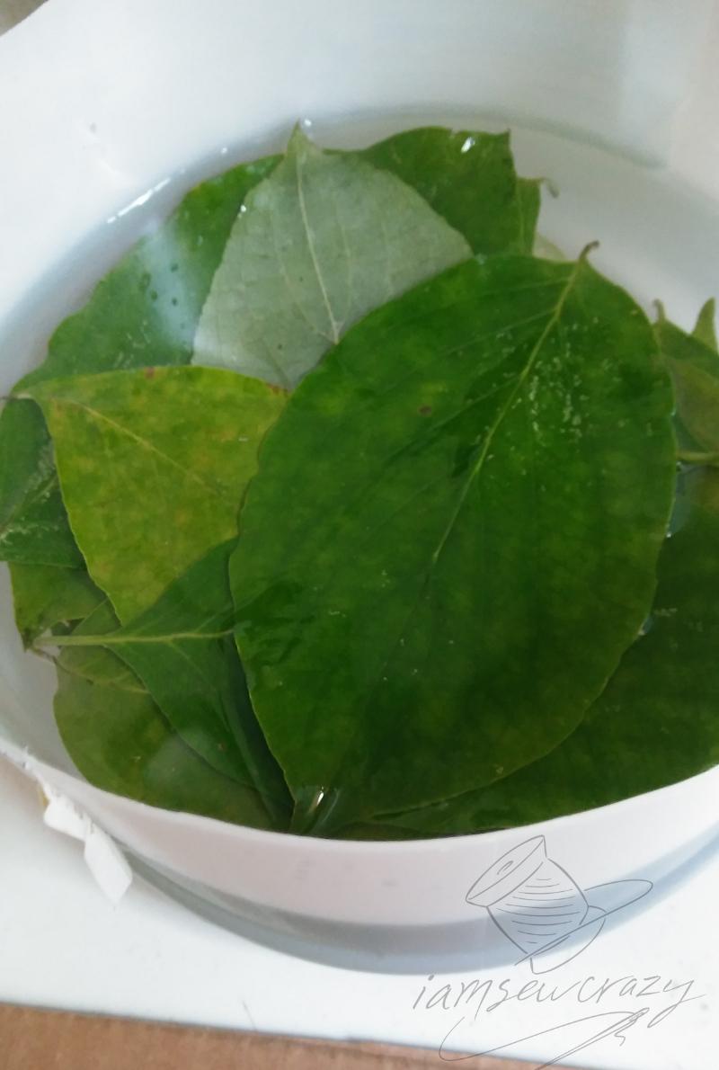 preserving leaves in glycerine